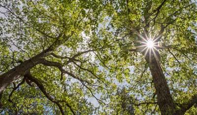 About Bethesda Presbyterian - Trees