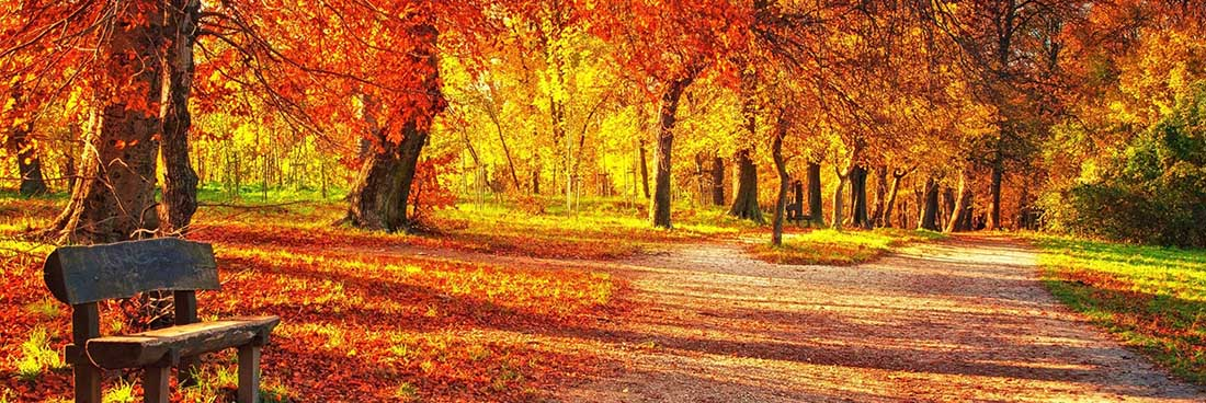Fall leaves, Bethesda Presbyterian Church