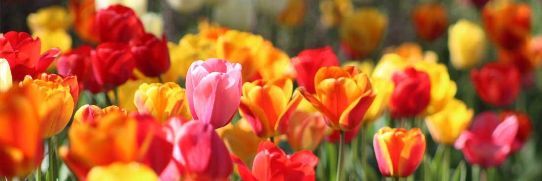 Flowers, Bethesda Presbyterian Church